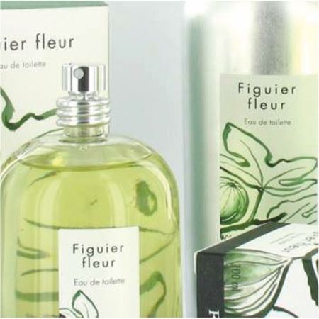 Picture for category Figuier Fleur